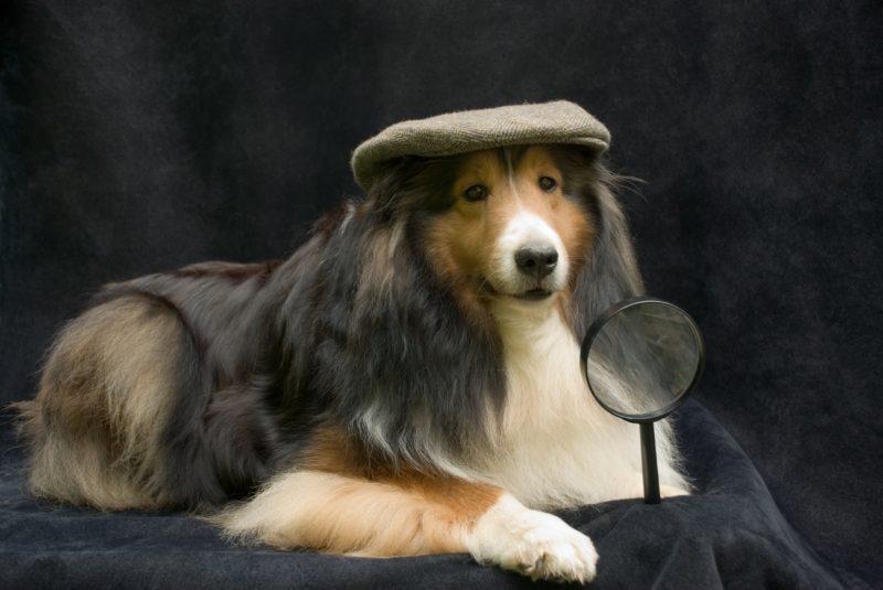 犬のクッキーの謎解きゲーム
